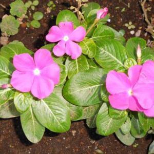 ピンクの可愛い花と派手に咲いてる花