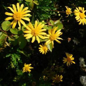 黄色の花と白い花