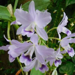 紫の蘭と青と白の小さな花