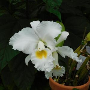 白い蘭と観葉植物