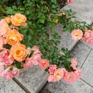 可愛いお花と綺麗な花