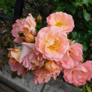 ピンクの花と赤い薔薇