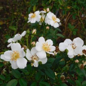 白い花とピンクの小さな花