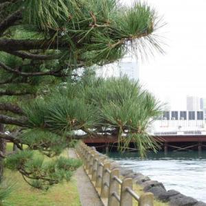 浜離宮で撮った隅田川の写真