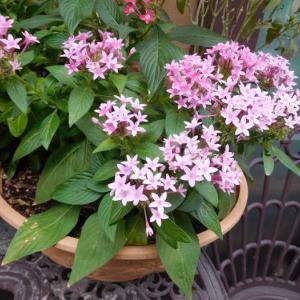 ピンクのお花とグラデーションの花