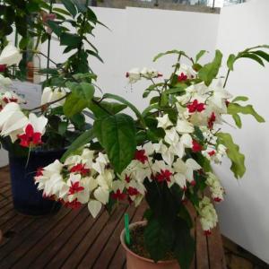 珍しい綺麗な花