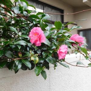 木に咲いた花