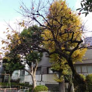 柿のなった木