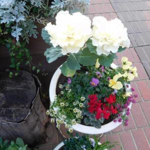 綺麗な花達