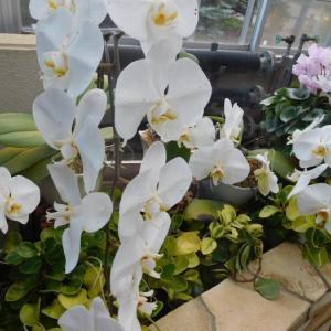白い蘭と黄色い花