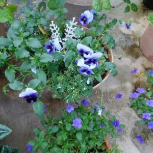 青い花と赤い葉