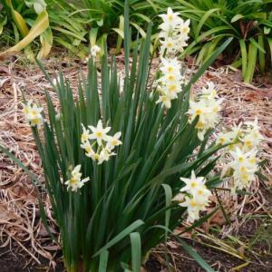 季節の花と寄せ植え