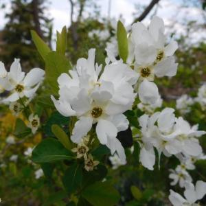 白くて綺麗な花とチューリップ他