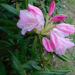 ピンク色の綺麗な花