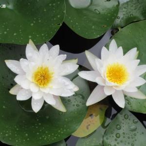 雨上がりの推薦とカラフルな花