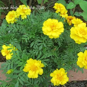 綺麗な花二種