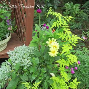 色々な植物