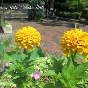 黄色とオレンジの鮮やかな花