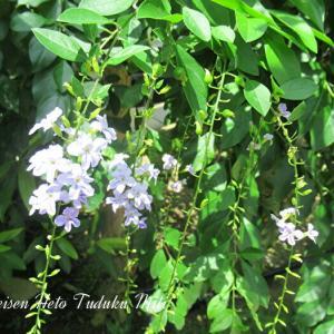 細かく綺麗に咲いた花