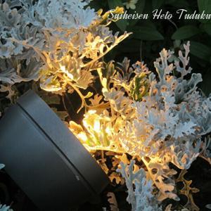 ライトアップと綺麗な花