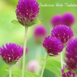 とても綺麗な花