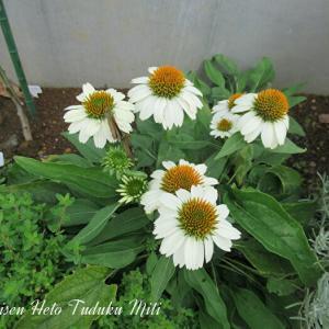 可愛い花と綺麗な花