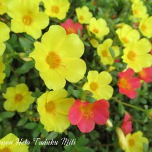 可愛くて鮮やかな花