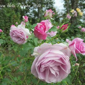 デコレーションの様な薔薇