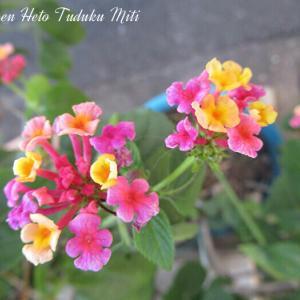面白くて綺麗な花と珍しい花