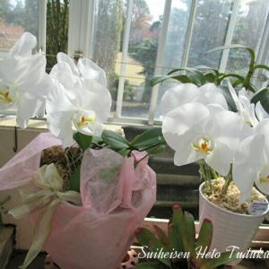 白い蘭とカトレア