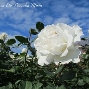 空へ咲く白い薔薇