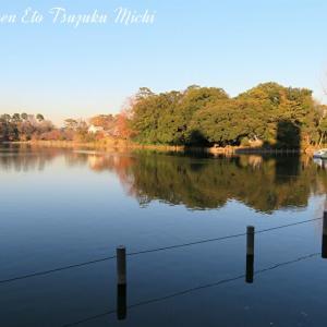 近くの池の風景