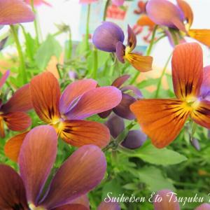 面白い花と良く見掛ける花