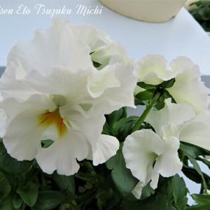 純白の花とカラフルな花