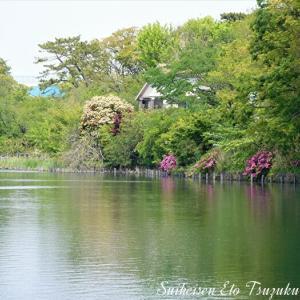 またしても近所の池池の風景