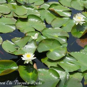 セイヨウスイレンと花壇の花