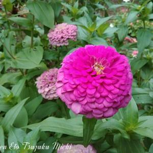 昨日出掛けた時に撮って来た花です