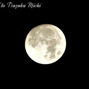 月齢 13.1 (中潮)の月です