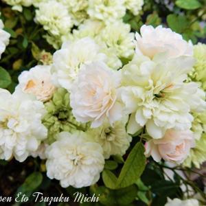 名前の分からない綺麗に咲いていた花