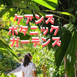 【ケアンズ旅行】車なしOK!無料の熱帯雨林オアシス
