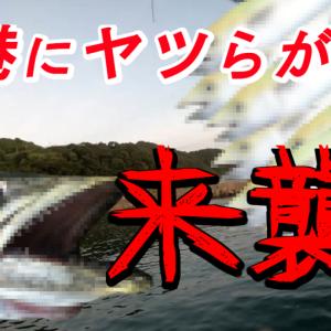 鳥取県秋の漁港で楽しむサゴシ釣り