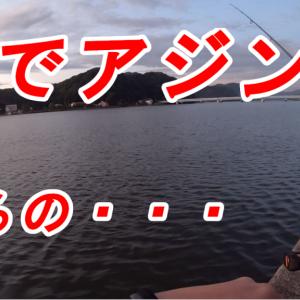 【動画有り】兵庫県豊岡市円山川でアジングしてきました!