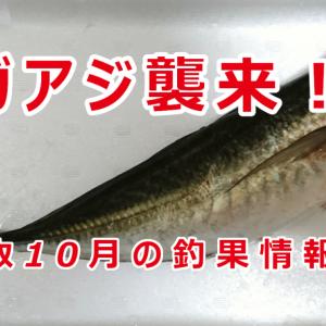 【10月】秋の釣果情報【鳥取県】
