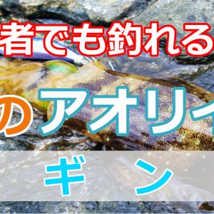 【エギング】アオリイカを釣るなら秋!基本から初心者におすすめの仕掛けも紹介