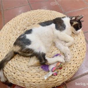バルセロナの猫カフェ・保護猫と触れあう癒しのひと時