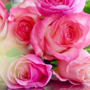【藤沢辻堂茅ヶ崎 顔ヨガ エステ】花も生き方があること、花を見ていて気づくこと。