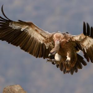 【衝撃】トイレに座ってたら大きな鳥が俺目がけて突っ込んできた!「ガン!」「ほっ…」