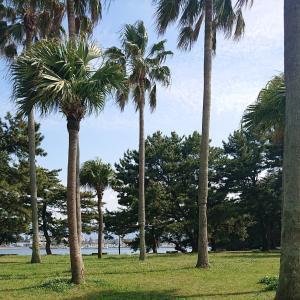 大きな公園と福岡タワー。