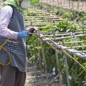 【日本は世界でもトップクラスに農薬を使う国だった!!!】