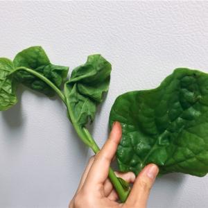 【急募】野菜に詳しい方教えてください!台湾?日本?の野菜